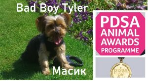 In October 2020 the PDSA Awards Panel has agreed a PDSA Commendation for Jurita's little dog, Bad Boy Tyler aims to celebrate the unparalleled devotion and enrichment that Bad Boy Tyler bring to our lives.. BADBOY LOVE COMMENDATION AWARDS FOR ANIMALS